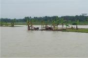1620 Hektar Terendam Banjir, Dinas Pertanian Minta Prmbenahan Sungai