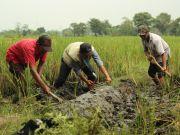 Uang Habis Bayar Bunga, Petani Pasuruan Beralih Ikut Program Tani Nusantara