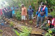 Buaya Besar Pemangsa Warga di Sebangau Kuala Berhasil Ditangkap Warga