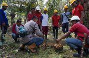 Hanasta Agri Berikan Bantuan Plasma ke Petani Sawit