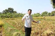 Lahan Kekeringan, Petani Padang Diminta Asuransikan Lahan