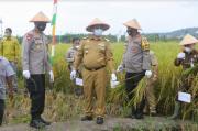 Gubernur Babel Hadiri Panen Raya di Desa Kepoh Bangka Selatan