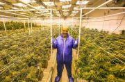 Mike Tyson Nikmati Bisnis Kebun Ganja Yang Membuat Jadi Miliuner
