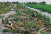 Kawanan Gajah Sumatera Rusak Lahan Pertanian Warga di Muba