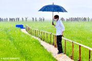 Penjelasan Istana soal Video Jokowi Hujan-hujanan ke Tengah Sawah