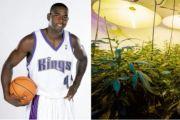 Legenda NBA Ini Tiru Mike Tyson Bisnis Kebun Ganja Jadi Miliuner