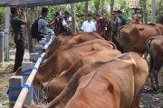 1.020 Ekor Sapi di Pringsewu Terdaftar Asuransi Usaha Ternak