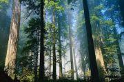 Cegah Perubahan Iklim, Upaya Kurangi Emisi Karbon Butuh Peran Semua Pihak