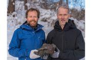 Meteorit Seberat 14 Kilogram Ditemukan di Hutan Swedia