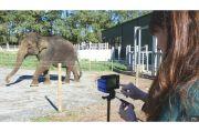 Peneliti Kembangkan Teknologi Baru untuk Kurangi Konflik Manusia dan Gajah