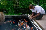 Armuji Beri Makan Ikan Koi dan Ziarah ke Makam Ayahanda Jelang Dilantik