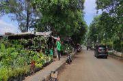 Imbas Proyek Stadion JIS, Puluhan Pedagang Tanaman Hias Sunter Agung Direlokasi