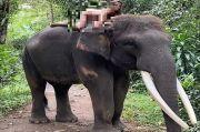 Gempar Model Cantik Rusia Telanjang di Atas Gajah, Polda Bali: Tak Ada Unsur Pidana