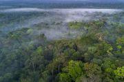 Gawat, Hutan Hujan Amazon Dijual Secara Ilegal di Marketplace Facebook
