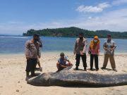 Ikan Paus 5 Meter Mati Terdampar di Pantai Pekon Tengor Tanggamus
