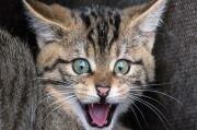 Bajak Pesawat, Kucing Ini Serang Pilot di Kokpit saat Mengudara
