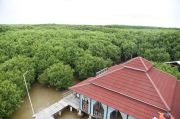 Ada Persemaian Mangrove Skala Besar di Brebes, RI Siap jadi Pusat Mangrove Dunia