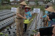 Urban Farming Versi Pemkot Bogor, Begini Penjelasan Dedie A Rachim