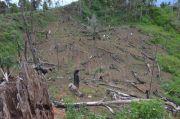 Gawat! Ada Potensi Food Estate Jadi Dalih Pembalakan Hutan dengan Nilai Ratusan Triliun