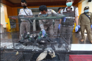 Ratusan Burung dan Kura-Kura dari Makassar Diselundupkan lewat Tanjung Perak