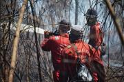 Cagar Biosfer Riau Terbakar, 100 Hektar Musnah