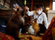 Pria Penyelamat Kucing-kucing yang Terlupakan di Zona Nuklir Fukushima