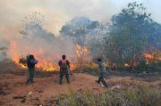 6 Hektare Hutan di Kawasan Lanud Hang Nadim Dibakar Orang, Asapnya Ganggu Penerbangan