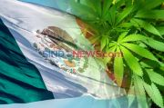 Kongres Meksiko Loloskan RUU Legalisasi Ganja