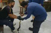 Menakutkan, Ular Korros Ditemukan dalam Closet Kamar Mandi