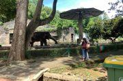 Hari Ini, Taman Margasatwa Ragunan dan 24 Taman Kota di Jakarta Kembali Dibuka