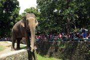 Minggu Siang, 3.000 Orang Serbu Taman Margasatwa Ragunan