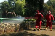 Bun, Jangan Khawatir Satwa di Taman Margasatwa Ragunan Bebas Covid-19