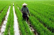 Serapan KUR Pertanian 2020 Lampaui Target