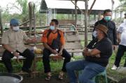 Gubernur Babel Erzaldi Canangkan Desa Buding Menjadi Kampung Ternak Sapi