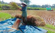Rencana Pembangunan yang Tidak Terkendali Ancam Lahan Pertanian di Pangandaran