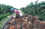 Ekspor Minyak Sawit di Januari 2021 Capai 2,86 Juta Ton