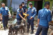 Gempar, Dilepas Pemiliknya Anjing Piaraan Serang Bocah 8 Tahun