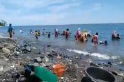Maluku Tengah Gempar, Material Emas Berserakan di Pesisir Pantai Pohon Batu