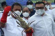 Janji Menteri Trenggono: Kita Lawan Ekspor Benih Lobster!