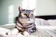 Kamu Pencinta Kucing? Baca Buku Seru tentang Perkucingan Ini!