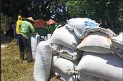 Bulog Target Serap 15 Ribu Ton Gabah Petani di Karanganyar