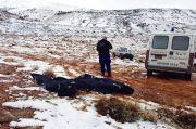 Empat Pengungsi Suriah Ditemukan Mati Membeku di Pegunungan Lebanon
