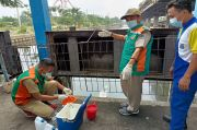 Ini Dugaan Sudin Lingkungan Hidup Terkait Ribuan Ikan Mati Mendadak di Kali Ancol
