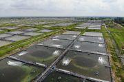 Shrimp Estate Bakal Bikin Produksi Udang Semakin Tegak