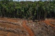 Hutan Tropis Terancam Akibat Meningkatnya Permintaan Produk Negara Maju