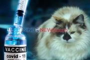 Pertama di Dunia, Rusia Ciptakan Vaksin COVID-19 untuk Hewan