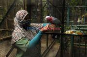 Sempat Diserbu Pengunjung, Kondisi Terkini Taman Margasatwa Ragunan