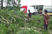 Hujan Deras Disertai Angin Kencang Ganggu Penerbangan dan Tumbangkan Pohon Besar
