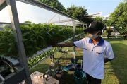 Urban Farming, Bertani di Lahan Mini Solusi Ketahanan Pangan