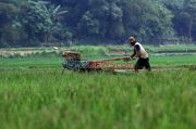 Tingkat Kesadaran Petani Asuransikan Lahan di Bekasi Masih Minim